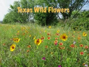 Wild Flowers copy